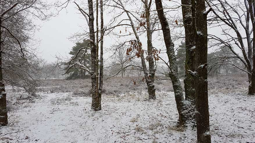 Kesselse-Heide-winter-01