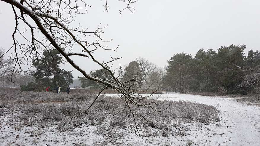 Kesselse-Heide-winter-02