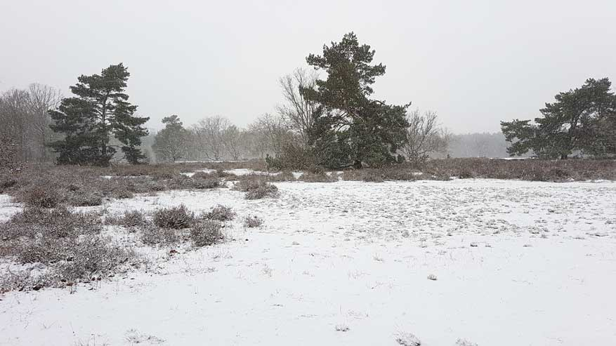 Kesselse-Heide-winter-03