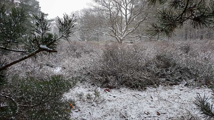 Kesselse-Heide-winter-06