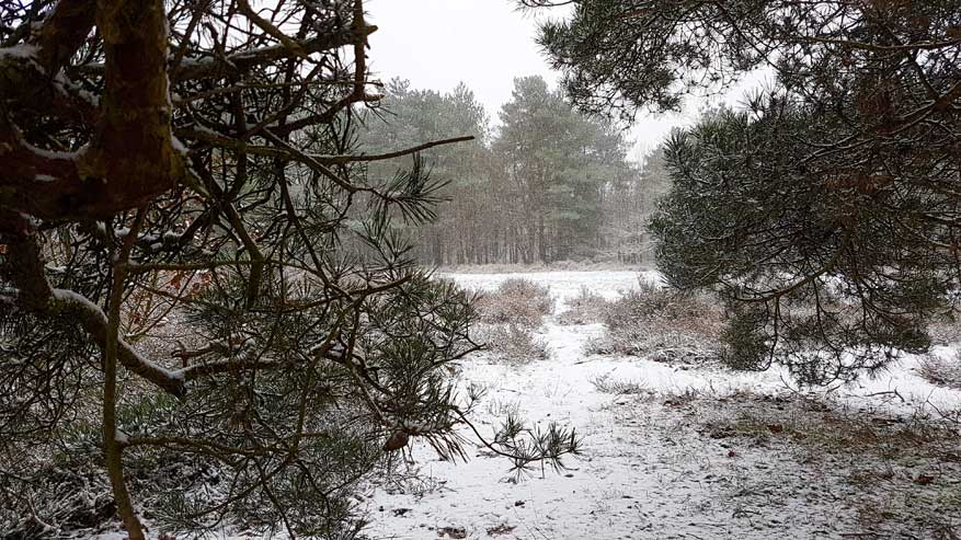Kesselse-Heide-winter-07