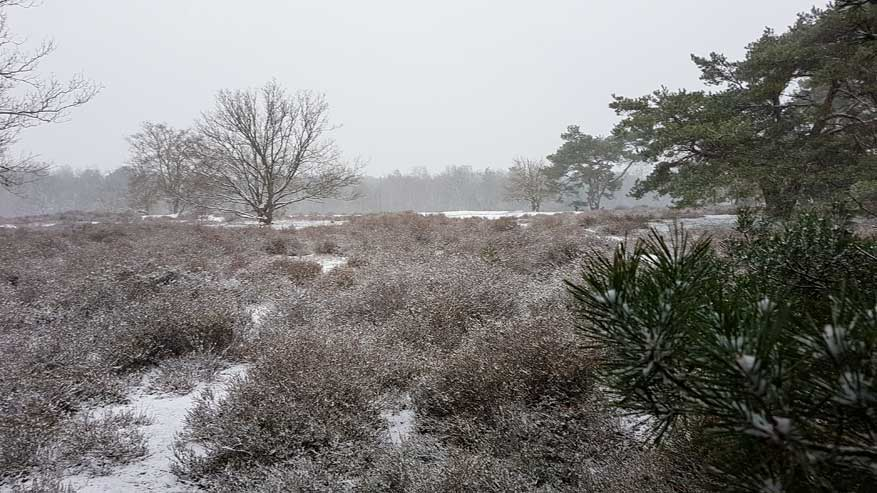 Kesselse-Heide-winter-08