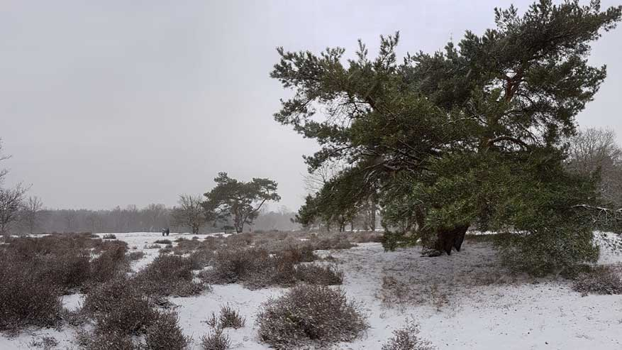 Kesselse-Heide-winter-10