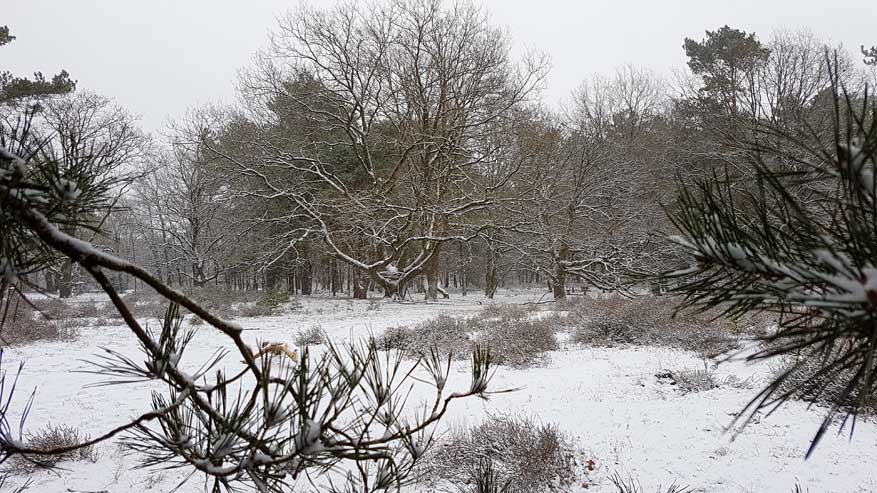 Kesselse-Heide-winter-11