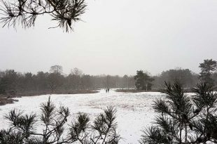 Kesselse Heide winter