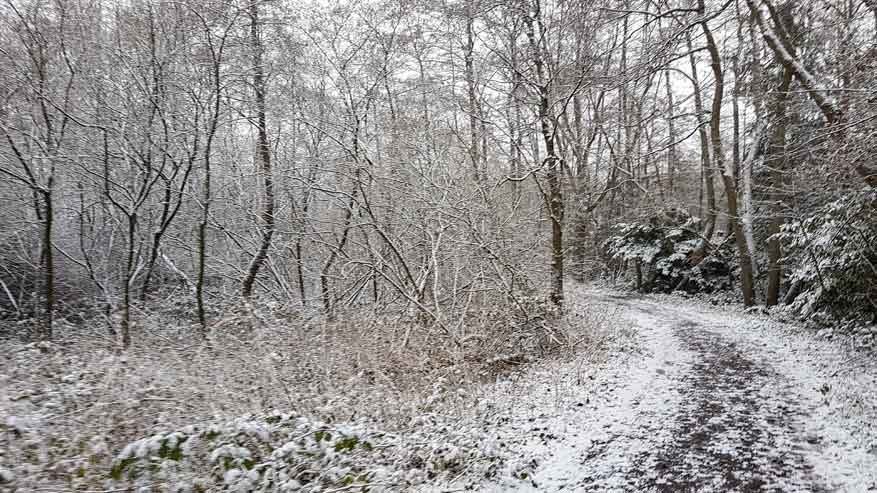 Kesselse-Heide-winter-13